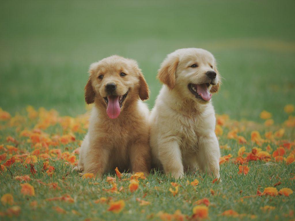 edelstenen voor huisdieren