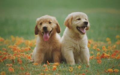 5 edelstenen voor huisdieren